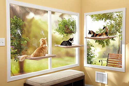 51cl3VOq3YL - 24 Affordable Products You Didn't Know You Needed For YOUR CAT! + Reviews